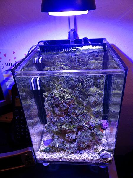 das 8l schreibtischprojekt aka superfish iqube 3 seite 3 aquarium forum. Black Bedroom Furniture Sets. Home Design Ideas